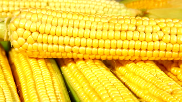 DOLLY: Corn On The Cob video