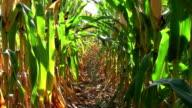 Corn Row Zoom video