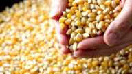 Corn video