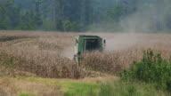 Cornfield Gone Dry video
