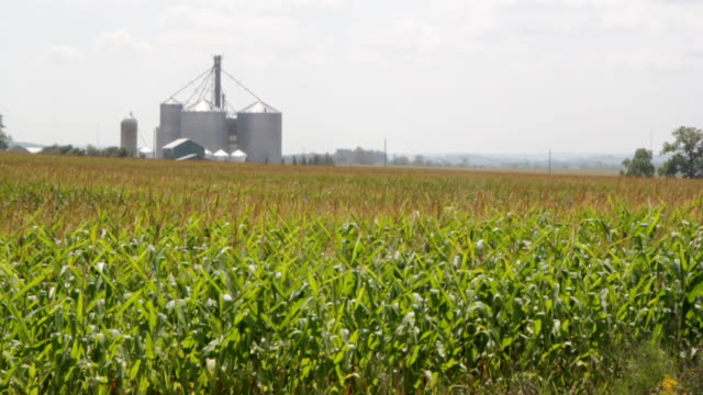 Cornfield with silos. video