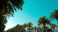Costa Daurada, Palm trees promenade in Salou sunny day video