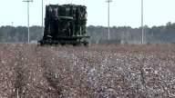 Cotton harvester operating in field video