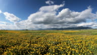 Country field in summer video