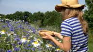 country girl reap flower blossom in wicker basket in field. video