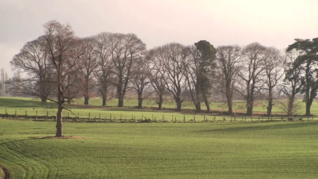 Country Landscape Zoom Out video