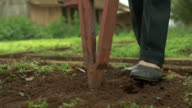Countryside Old Farmer Sowing video