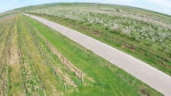 Countryside road crossing between vineyard and blossomed orchard in spring, agricultural landscape aerial view video