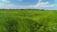 HD SLOW MOTION: Countryside With Green Wheat Fields video