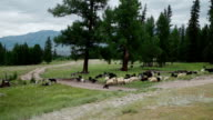 Countryside with sheep. landscape mountain. video