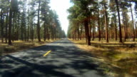 County Road Rural Oregon Forested Landscape Auto Transportation video