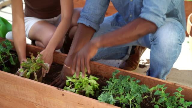 Couple adding a biodegradable plant pot into a planter box video