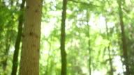MEDIUM TILT DOWN SHOT DOLLY SHOT Couple flirting in forest on sunny day video
