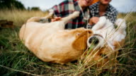 Couple having fun with their playful dogs on romantic autumn camping video