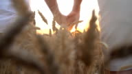 HD SUPER SLOW-MOTION: Couple Holding Hands In Wheat Field video