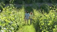 Couple in vineyard video