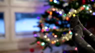 Couple looking Christmas Tree Decorations Illuminated and Winter Snowstorm video