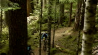 Couple Mountain Biking in an Old Growth Forest video