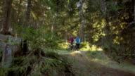 SLO MO Couple on mountain bikes riding down forest trail video