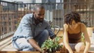 Couple Planting Kale in Urban Rooftop Garden video