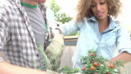 Couple Planting Rooftop Garden Together In Slow Motion video