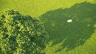 AERIAL Couple relaxing in shadow of the tree video