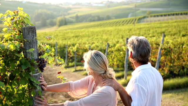 Couple walk into vineyard, look at view video