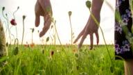 CU TS Couple Walking In The Poppy Field video