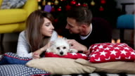 Couple with dog home at Christmas Eve video