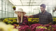 Couple Working Together In Greenhouse video