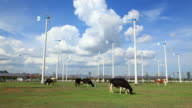 Cow Grazing with Turbine Farm video