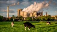 Cow VS Power Plant video