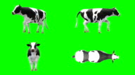 Cow Walking Green Screen (Loopable) video