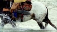 Cowboy on horseback Crossing river video