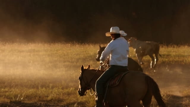 Cowboy on horses at sunset, slow motion video