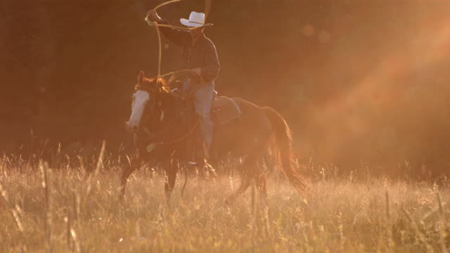 Cowboy roping at sunset, slow motion video