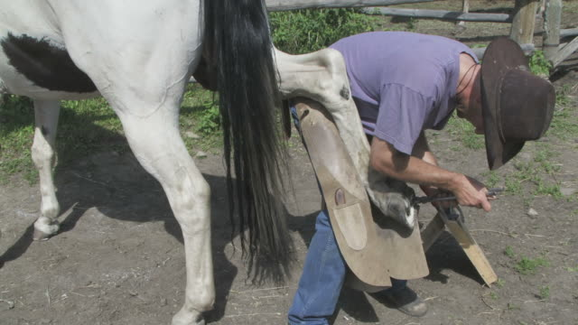 Cowboy shoeing a horse video