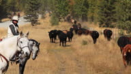 Cowboys counting cattle on horseback video