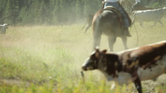 Cowboys on horseback herding cattle video