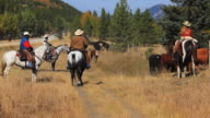 Cowgirl and Cowboys counting cattle on horseback video
