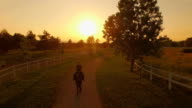 AERIAL: Cowgirl horseback riding a big horse through fields at golden sunset video