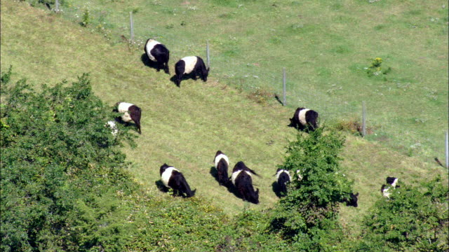 Cows grazing - Aerial View - Rhode Island, Newport County, United States video