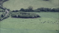 Cows In Fields  - Aerial View - Munster,  Cork,  helicopter filming,  aerial video,  cineflex,  establishing shot,  Ireland video