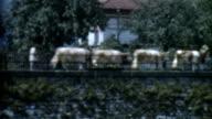 Cows on a Bridge 1950's video