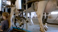 Cows on a indoor farm video