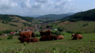 Cows_Valley view video