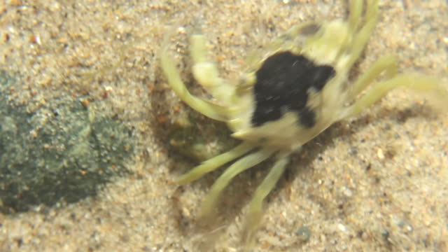 Crab In a Rock Pool video