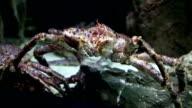 Crab sea monster video