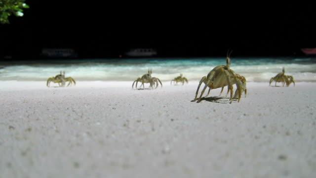 Crabs Race video