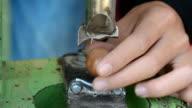 Cracking Macadamia nut video